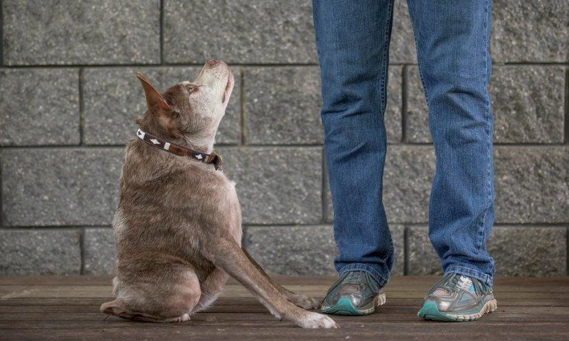 Experience: I own the world's ugliestdog